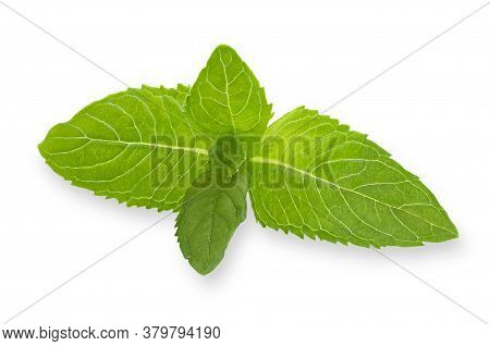 Mint Leaf Isolated On White Background With Shallow Depth Of Field