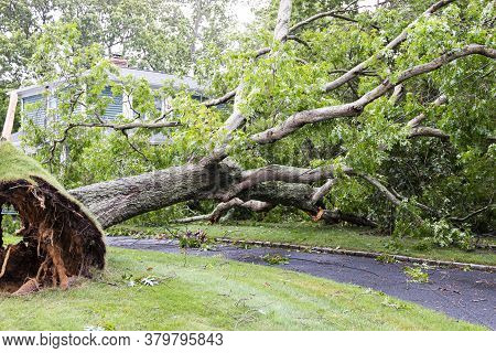 A Neighbors Tree Gets Blown Down By Tropical Storm Isaias Falling On To A House And Over The Drivewa