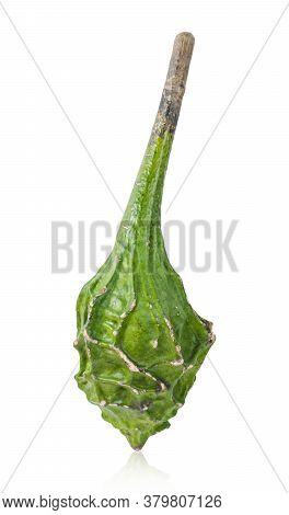Calabash, Also Called Bottle Gourd, Latin Name Lagenaria Siceraria, Variety Dinosaur, Isolated On Wh