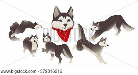 Set Of Cartoon Siberian Husky Dogs, Domestic Animals And Funny Animals.