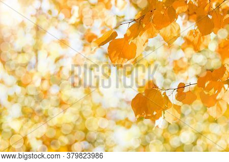 Autumn Branch With Beech Leaves Decorate Beautiful Nature Bokeh Background Copy Space Place For Text