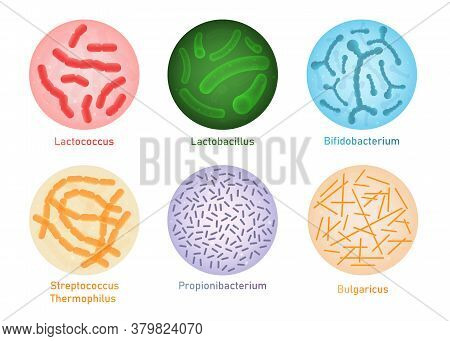 Probiotic Bacteria Set - Microscope View Of Gut Flora Microorganisms