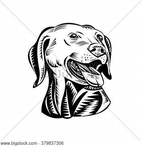 Retro Woodcut Style Illustration Of  Head Of A Labrador Retriever, Labrador Or Lab, A Medium-large B