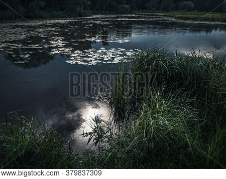 Moonlit Night In The Swamp. Moon Reflection In The Water.