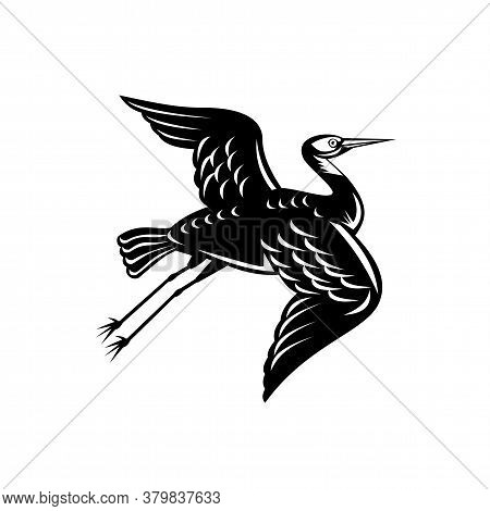 Retro Woodcut Style Illustration Of A White-faced Heron Egretta Novaehollandiae, White-fronted Heron