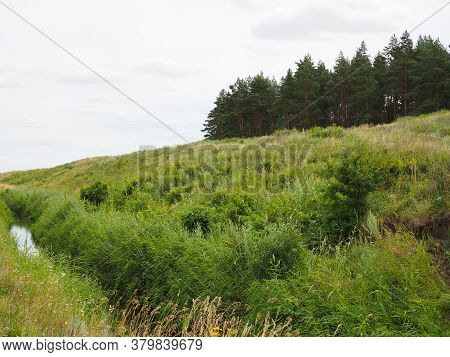 Summer Landscape With Pine Forest On The Edge Of A Green Meadow And A Stream On A Cloudy Day