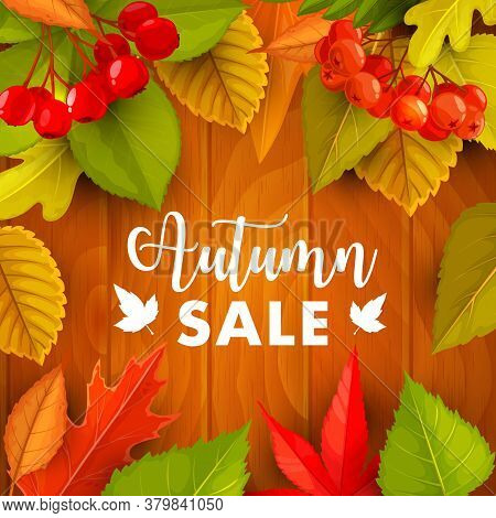 Autumn Sale Vector Promo With Fall Foliage, Hawthorn And Rowan Berries On Wooden Background. Seasona