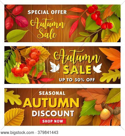 Autumn Sale Vector Promo With Hawthorn Or Rowan Berries, Fallen Leaves And Acorn On Wooden Backgroun