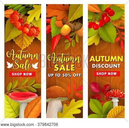 Autumn Sale, Fall Season Discount Price Offer. Fallen Leaves, Hawthorn And Rowanberry Branch With Ru