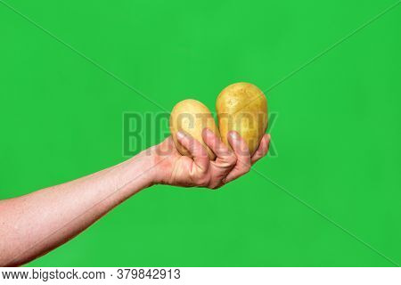 Holding Two Potatoes On A Green Background