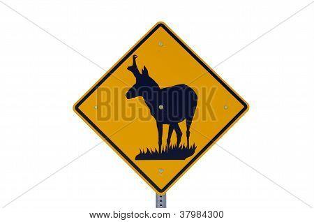 Pronghorn Antelope Sign