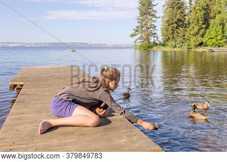 A Girl Sits On A Wooden Pier And Feeds Wild Mallards.