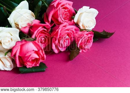 Pink And White Roses On Pink Background. High Quality Photo