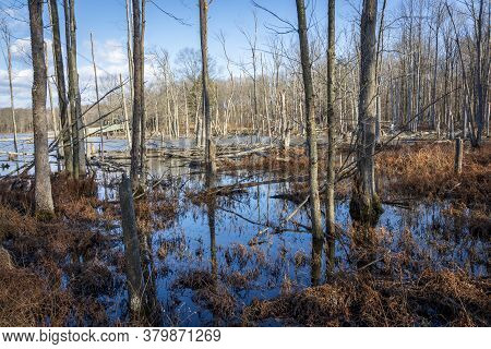 Dead And Fallen Trees Disrupt The Mirror-like Surface Of A Marsh In Winter.