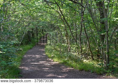 Winding Footpath Through A Lush Green Forest