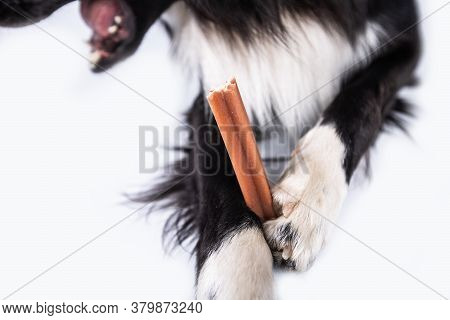 Border Collie Chewing A Toy For Dental Care. Dog's Oral Hygiene .