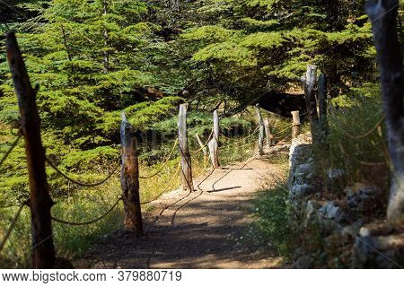 Trail In The Cedar Forest, Lebanon. Beautiful Sunlight Among The Trees. The Cedars Of God Grove In Q