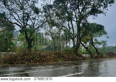 Trees Beside Kolkata Road With Dim Sky In Background, Monsoon Image Of Kolkata, West Bengal, India.