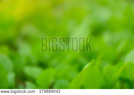 Blurred Of Green Nature Background. Bokeh Of Leaves Tree With Sunlight. Environment Relax At Dayligh