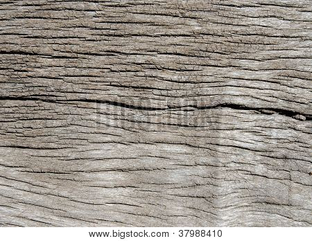 Wood Texture With Nature Form