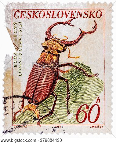 Czechoslovakia - Circa 1962: Postage Stamp Printed By Czechoslovakia, Shows Stag Beetle, Circa 1962