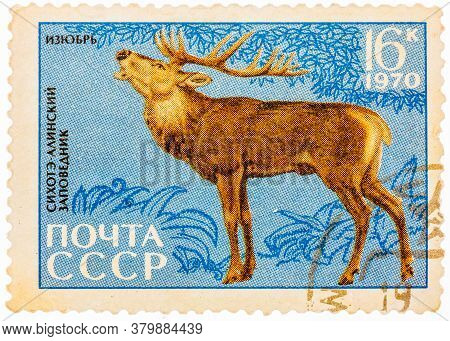 Ussr - Circa 1970: Postage Stamp Printed In Ussr Shows Image Of A Cervus Elaphus Xanthopygus Manchur