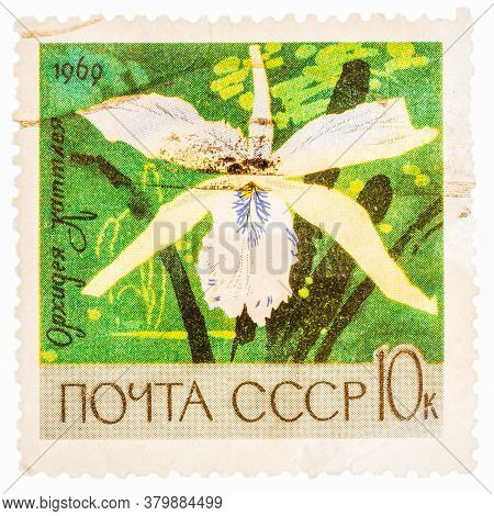 Ussr - Circa 1969: A Stamp Printed In Ussr Russia Shows White Orchid With The Inscription Cattleya ,