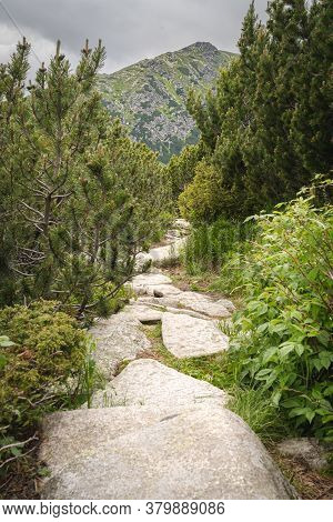 Rocky Hiking Trail In High Tatras Mountains In Slovakia Surrounded By Dwarf Pine And Other Coniferou