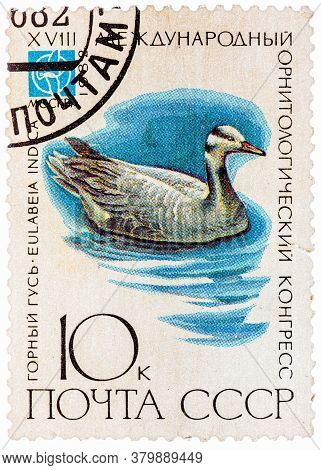Ussr - Circa 1982: A Stamp Printed In Ussr Russia Shows A Bird Eulabeia Indica With The Inscription