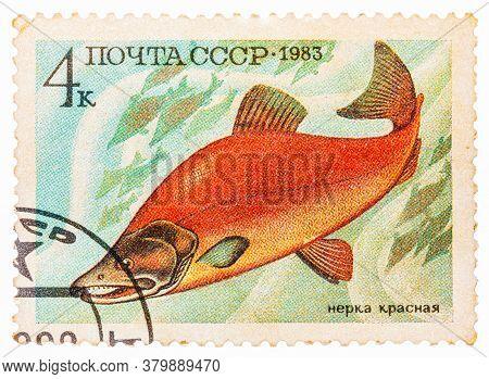 Russia - Circa 1983: Post Stamp Printed In Ussr Cccp, Soviet Union Shows Oncorhynchus Nerka Sockeye,