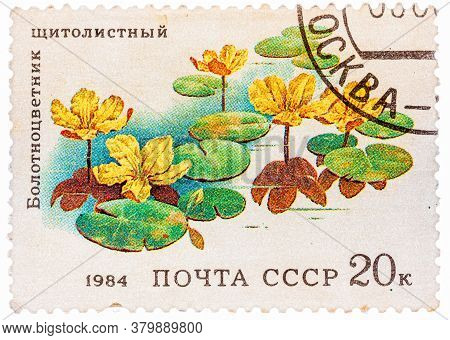Ussr - Circa 1984: Stamp From The Ussr Shows Image Of Belotsvetnik Schitolistny, Circa 1984