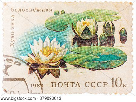 Ussr - Circa 1984: Stamp From The Ussr Shows Image Of Water Lilies, Circa 1984