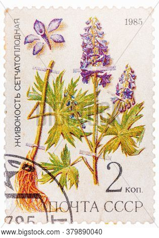 Russia - Circa 1985: Post Stamp Printed In Ussr Cccp, Soviet Union Shows Plant Of Delphinium Dictyoc