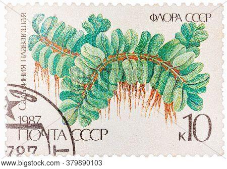 Ussr - Circa 1987: Stamp Printed In The Ussr Shows Floating Salbiniya, Circa 1987