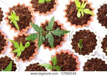 Plant Growth-baby Plants