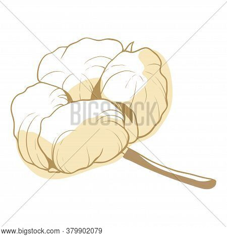 Cotton Flower, Soft Fluffy Blossom For Decoration