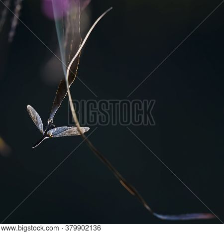 A Blue Dragonfly Lands On Top Of A Leave, Great Meadow National Wildlife Refuge