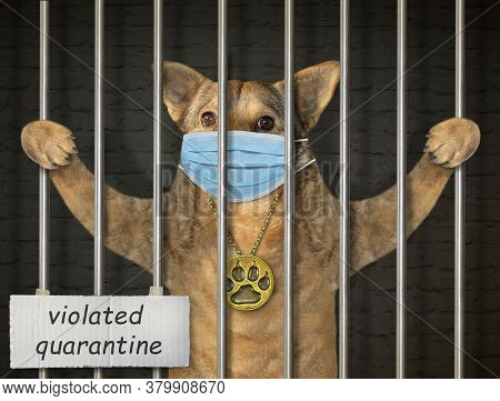The Beige Dog In A Protective Mask Is Behind Bars In The Prison. Violated Quarantine. Coronavirus.