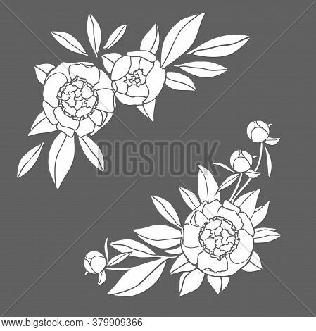 Decorative Floral Elements For Wedding Invitations. Peony Flowers, Buds, Leaves. Natural Illustratio