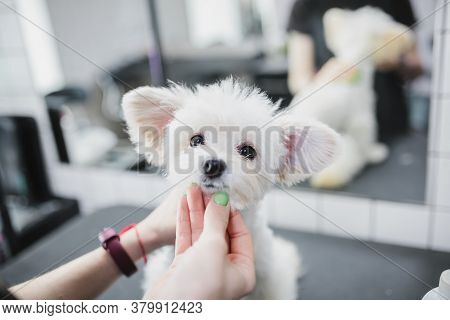 Grooming And Bathing Dogs. Caring For Little Friends.
