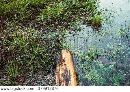Rotten Fallen Tree Trunk Floats In Calm Water Near Shore With Rich Flora. Beautiful Driftwood In Wat