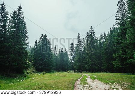 Atmospheric Forest Scenery With Dirt Road Among Firs In Mountains. Scenic Landscape With Glade In Mo