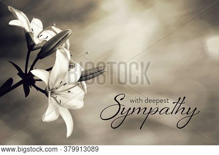 Sympathy Card With Lily Flowers On Blurred Background
