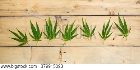 Fresh Hemp Leaves On The Wooden Background As A Decoration
