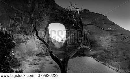 Black And White Photo Of Dead Tree In Front Of The Ear Of The Wind, A Hole In A Rock Formation In Mo