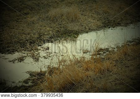 A Small Shallow Stream Among Withered Grasses. Wetlands. Vignette.