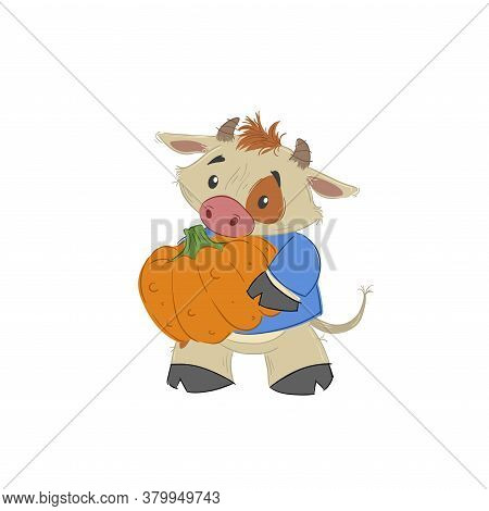 Cute Bull, Ox Or Bison Taking A Pumpkin. 2021 Chinese Year Of Bull Symbol. Cartoon Hand Drawn Style.