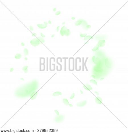 Green Flower Petals Falling Down. Good-looking Romantic Flowers Vignette. Flying Petal On White Squa