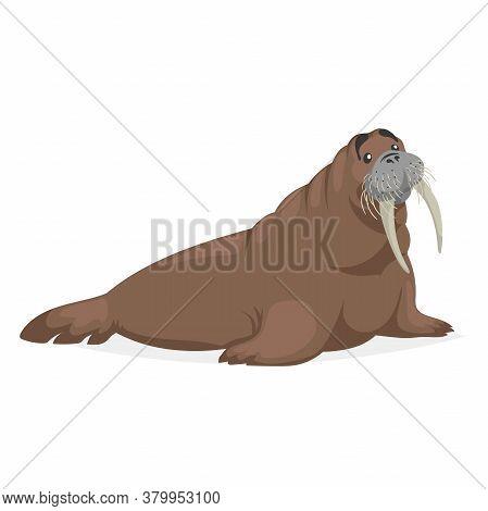 Cute Walrus. Polar Animal Cartoon Illustration. Flat Style Design. Best For Kid Education. Vector Dr