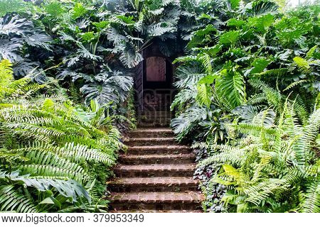 Secret Doors With Stone Stairs Surrounded By Dense Fern And Monstera (monstera Deliciosa) Green Leav